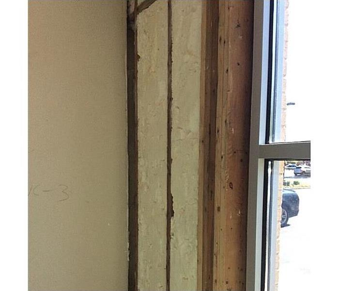 Commercial Mold Growth After