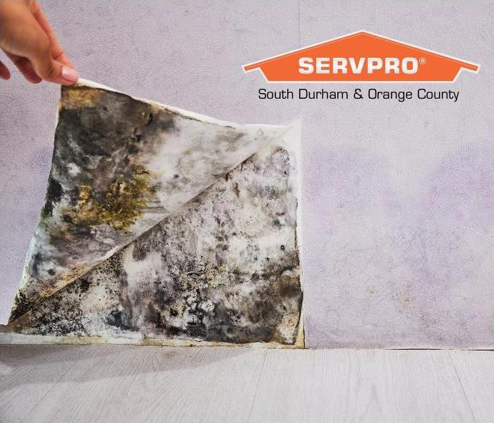 Dealing with Mold in Commercial Buildings